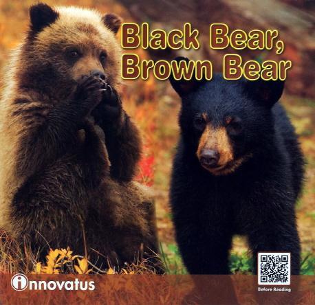 Black bear, brown bear
